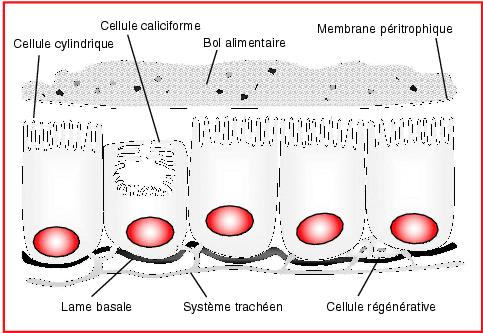 La maladie de la peau le psoriasis de la photo