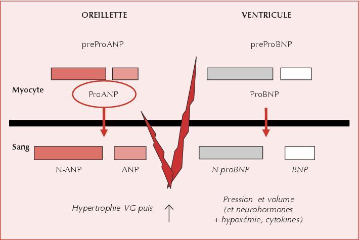 S23 https://sportpeptides.com/pt-141-bremelanotide-review/ Sarm