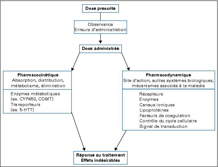 Achat Griffonia Simplicifolia - Comprendre et traiter la déprime - AXA Prévention