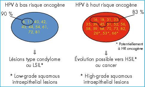 papillomavirus hauts risques)