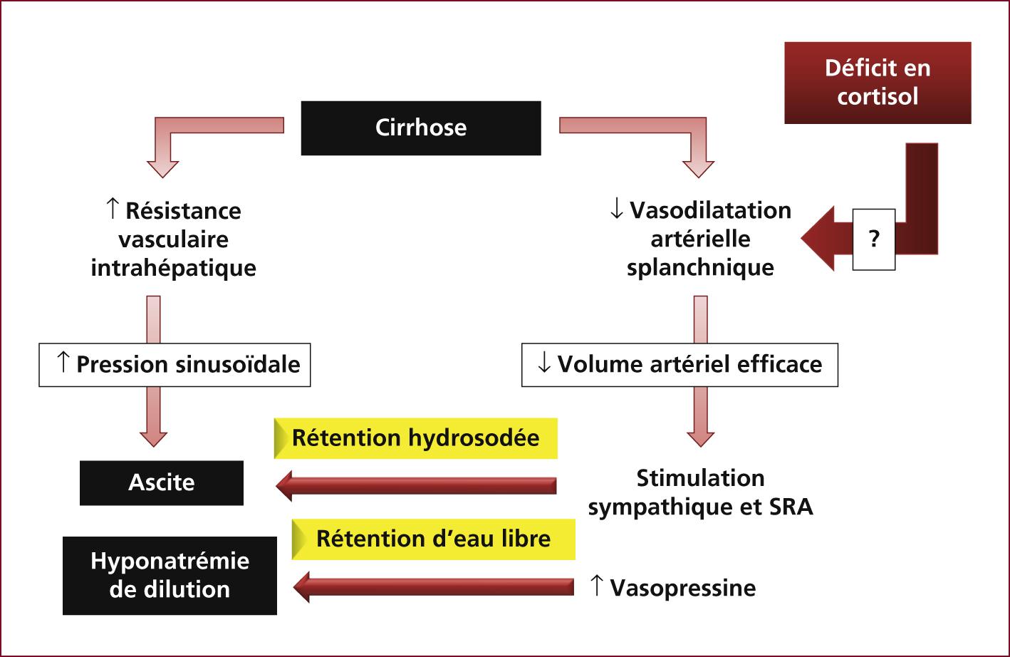 Hypertency: Hypertension Portale Cirrhose